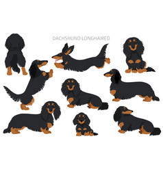 Dachshund long haired clipart different poses vector