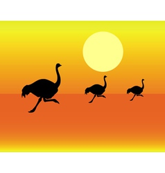 running ostriches vector image