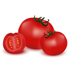 Fresh red Tomatoes vector