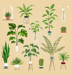 plants in pots houseplant succulent plants vector image