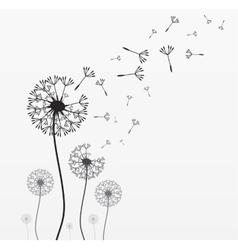 Seven dandelions vector image vector image