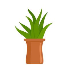 Succulent pot icon flat style vector