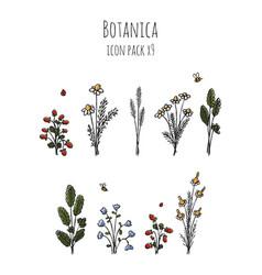 Botanica - stylized nine items colored icon set vector