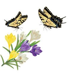 Colorful crocus flowers vector
