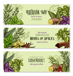 Herb hot spice and food condiment sketch banner vector