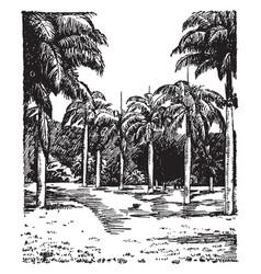 botanic garden entrance vintage vector image