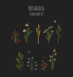 Botanica dark - stylized floral colored icons vector