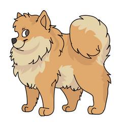 Cute cartoon pomeranian dog breed clipart vector