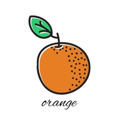 Hand drawn orange in doodle style vector image