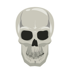 human skull drawing vector image