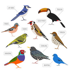 Pet birds collection breeds icon set flat style vector