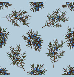 seamless pattern with hand drawn colored juniper vector image