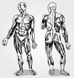 Body vector image vector image
