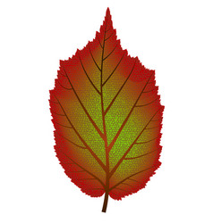 image of red and green autumn tree leaf vector image