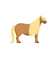 Shetland pony thoroughbred horse vector