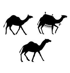silhouettes of camels vector image
