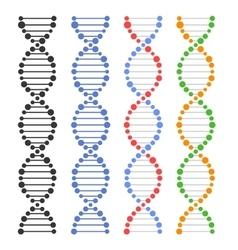 DNA Genome Molecules Set vector image