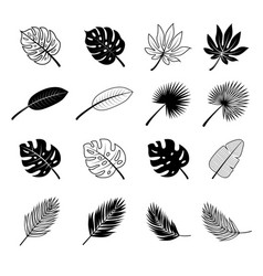 concept of tropical leaves and vector image