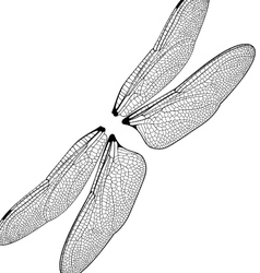 Dragonfly wings vector