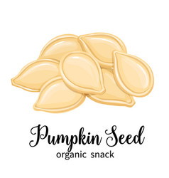 Pumpkin seeds vector
