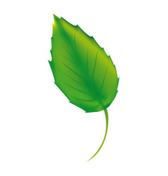 sticker green leaf icon vector image