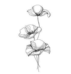 poppies flowers line art vector image