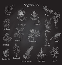 Collection different oil plants vector