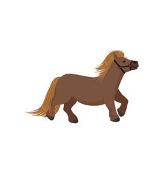 Cute brown pony thoroughbred horse vector