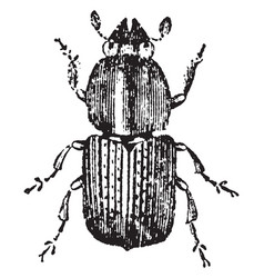 European elm bark beetle vintage vector