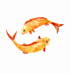 koi fish watercolor vector image