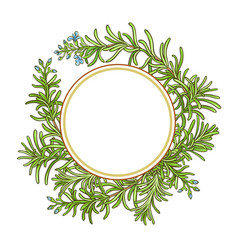 Rosemary branch pattern vector
