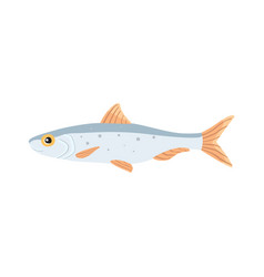 Sardina fish isolated cartoon vector