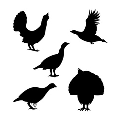 silhouettes of a capercaillie vector image