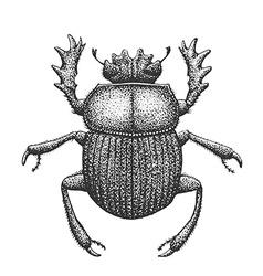 Scarab Engraving vector image