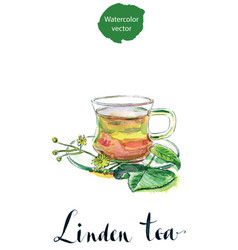 Cup of healthy linden tea and flowers vector