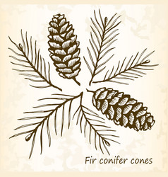 Fir conifer cones set vector