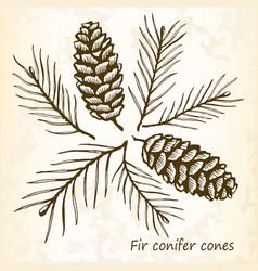 fir conifer cones set vector image vector image
