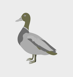 In flat style of wild duck vector