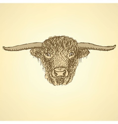 Sketch bull head in vintage style vector image