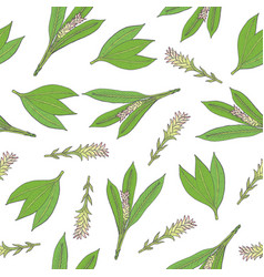 Botanical seamless pattern with green turmeric vector