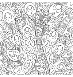 peacock coloring page vector image