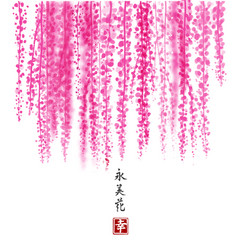 pink wisteria hand drawn with ink on white vector image