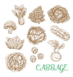sketch icons of cabbage vegetables vector image