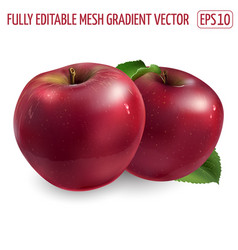 Two ripe red apples on a white background vector