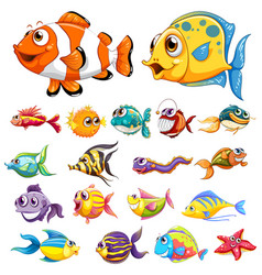 Different types fish vector
