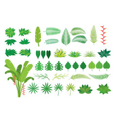 leaves tropical jungle set vector image