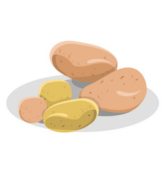New and pink potatoes on white plate vector