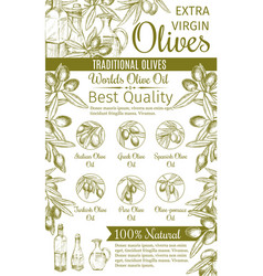 Olive oil sketch banner of green fruit and branch vector