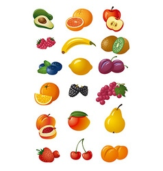Various fresh fruits vector