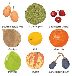 Set of fruits on white background vector